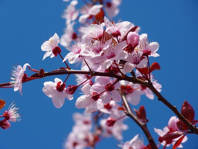 この画像には alt 属性が指定されておらず、ファイル名は 【植物】桜.jpg です